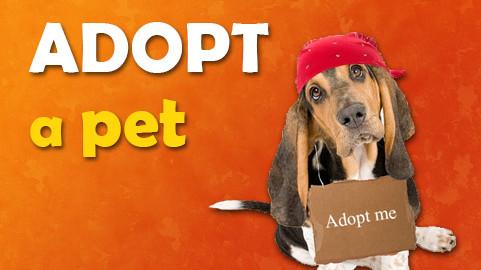 Save a life! Adopt a pet!