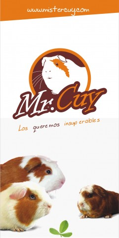 Conception graphique Mister Cuy